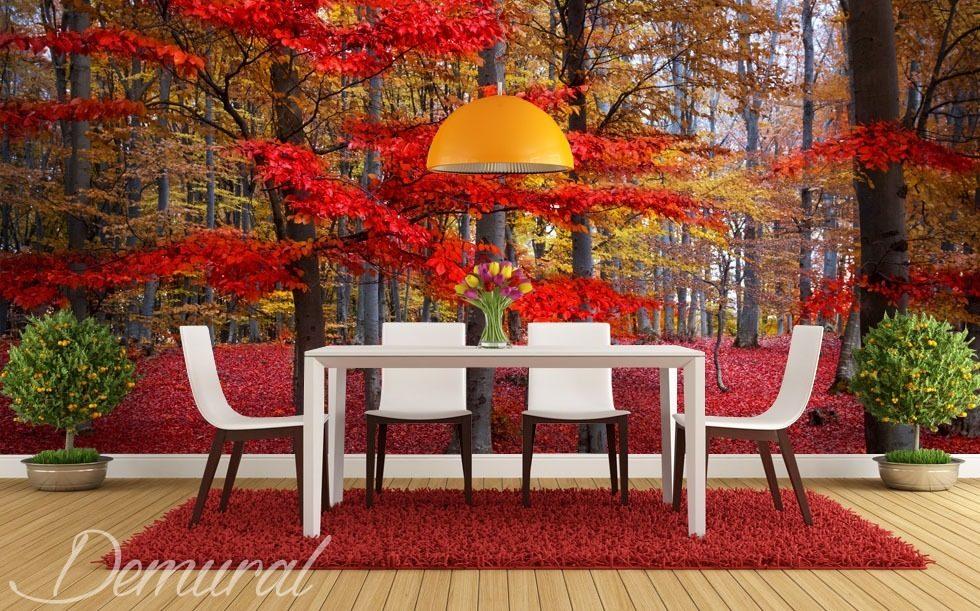 Rote Blätter an dem Baum - Fototapeten Wald - Fototapeten - Demural